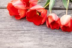 A bouquet of red tulips on the background of wooden, old boards. Place for text. The concept of spring has come royalty free stock photography