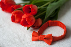Bouquet of red tulips and bow tie Stock Images