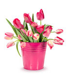 Bouquet of red tulips in a bucket Royalty Free Stock Photography