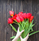 Bouquet of red tulips on a dark wooden table. And womens hands Royalty Free Stock Photo