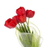 Bouquet of red tulips is decorated by gossamer Stock Photo