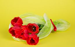 The bouquet of red tulips Stock Photography
