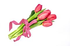 Bouquet of red tulips decorated with ribbon, isolated over white Stock Photography