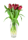 Bouquet of red tulips Royalty Free Stock Photos