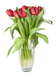 Bouquet of red tulips in a glass vase royalty free stock image