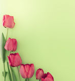Bouquet of red tulips on green background with space Royalty Free Stock Images
