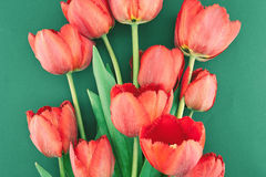 Bouquet of red tulips on a green background. Spring flowers. Stock Photo