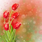 Bouquet of red tulips with green leaves Stock Photo