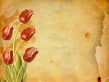 Bouquet of red tulips with green leaves Stock Images
