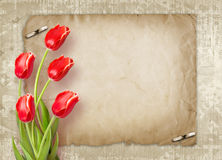 Bouquet of red tulips with green leaves Royalty Free Stock Photography
