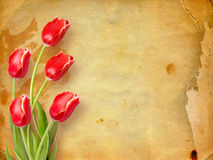 Bouquet of red tulips with green leaves Royalty Free Stock Images