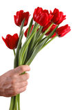 Bouquet of red tulips in a hand stock photos