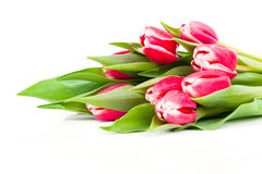 Bouquet of red tulips Royalty Free Stock Images