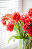 Bouquet of red tulips macro Royalty Free Stock Photo