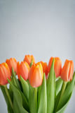 Bouquet of red tulips Royalty Free Stock Photography
