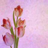 Bouquet of red tulips and a polka dot card. EPS 10 royalty free illustration