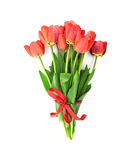 Bouquet of red tulips with red ribbon isolated on white Stock Photos
