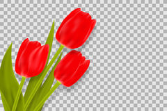 Bouquet of red tulips with space for greeting message. Stock Photography