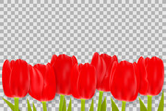 Bouquet of red tulips with space for greeting message. Royalty Free Stock Images