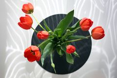 A bouquet of red tulips, top view. Sunlight stock photo