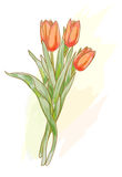 Bouquet of red tulips. Watercolor style. Stock Photo