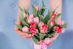 A bouquet of red tulips which the girl hugs her hands on a gentl Stock Photography