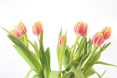 Bouquet of red tulips. On a white background Stock Photo