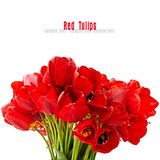 Bouquet of the red tulips on white background isolated Royalty Free Stock Image