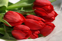 Bouquet of red Tulips. On white fabric Stock Photos