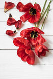 Bouquet of red tulips on white wooden background, Royalty Free Stock Photography
