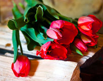 Bouquet of red tulips Stock Image