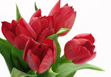 Bouquet of red tulyps. Beautiful bouquet red tulip isolated flower five Royalty Free Stock Images