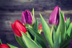 Bouquet of red and violet tulips in front of wooden background Stock Photo