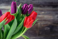 Bouquet of red and violet tulips in front of wooden background Royalty Free Stock Photos