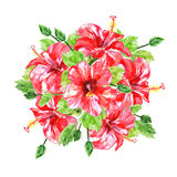 Bouquet from red watercolor Hibiscus flowers Royalty Free Stock Photo