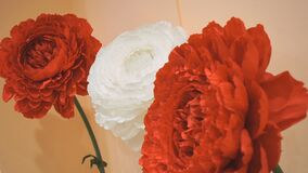Bouquet of red and white carnations. Close-up stock footage