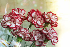 A bouquet of red and white carnations Stock Photos