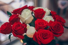 Bouquet of red and white roses. royalty free stock photos