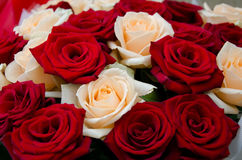Bouquet of red and white roses Stock Images