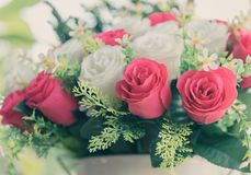 Bouquet of red and white roses in pastel vintage color style stock photos