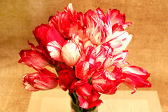 A bouquet of red and white tulips3. Bouquet of red with white tulips on a beige background Stock Photos