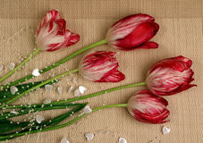 A bouquet of red and white tulips4. Bouquet of red with white tulips on a beige background Stock Images