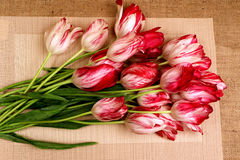 A bouquet of red and white tulips7. Bouquet of red with white tulips on a beige background Royalty Free Stock Photos