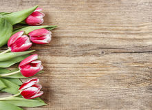 Bouquet of red and white tulips Royalty Free Stock Images