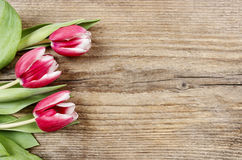 Bouquet of red and white tulips Royalty Free Stock Photo