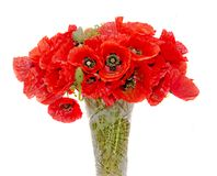 Bouquet of red wild flowers of Papaver rhoeas close up Royalty Free Stock Photography