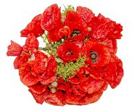 Bouquet of red wild flowers of Papaver rhoeas close up Royalty Free Stock Images
