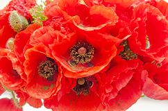 Bouquet of red wild flowers of Papaver rhoeas close up Stock Images