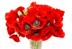 Bouquet of red wild flowers of Papaver rhoeas, corn field poppy Stock Photos