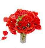 Bouquet of red wild flowers of Papaver rhoeas, corn field poppy Stock Photo